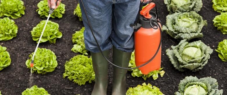 Pesticides : le glyphosate obtient un sursis