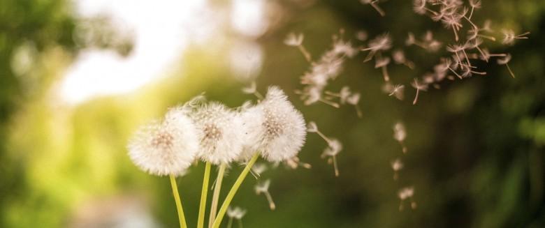 Allergies : les meilleures applications pour traquer le pollen