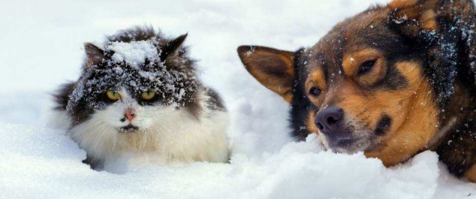 Les groupes Chien-chat-froid