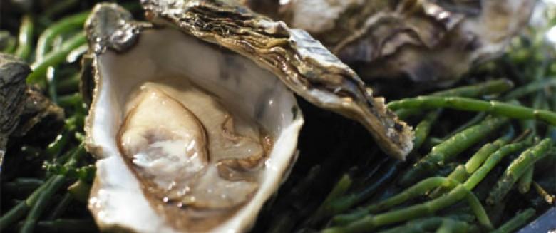 L'huître : un trésor de bienfaits nutritionnels