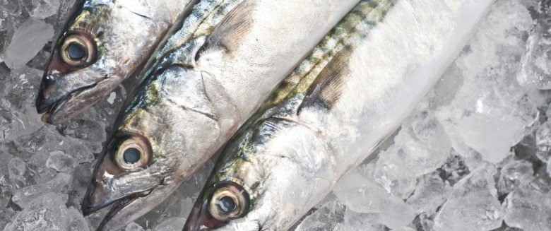 Pollution des eaux : peut-on encore consommer du poisson ?