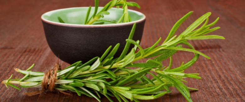 Le romarin, propriétés et utilisations en santé naturelle
