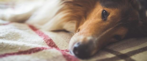 Partager son lit avec un animal de compagnie : quels sont les risques ?
