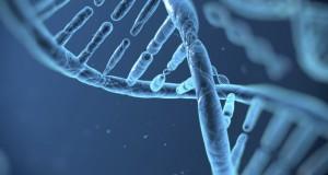 Recherche d'ADN