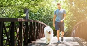 Le chien, un coach sportif idéal