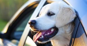En vacances avec son chien : les précautions à prendre