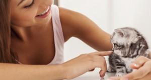 Le chat, un vrai soutien psychologique
