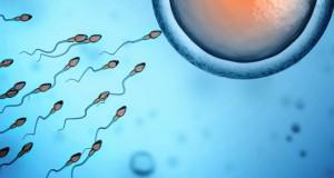 Les spermatozoïdes aiment l'hiver !