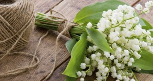 Muguet du 1er mai : attention au risque d'intoxication