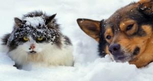 Chien et chat : peut-il rester dehors dans le froid ?