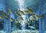 Contempler les poissons d'un aquarium, c'est bon pour le cœur