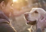 Votre chien est-il intelligent ? Bientôt, un test de QI
