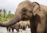 Pourquoi les éléphants n'ont-ils pas de cancer ?