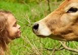 Comment les chats et les vaches protègent les enfants de l'asthme