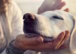Quand les animaux soulagent les troubles psychiques