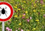 Maladie de Lyme: les mesures du plan d'action national détaillées