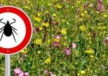 Maladie de Lyme: pourquoi les tests de dépistage ne sont pas fiables à 100%