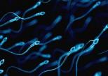 La qualité du sperme ne cesse de baisser dans les pays occidentaux