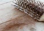 Chute de cheveux : les bons aliments pour l'éviter